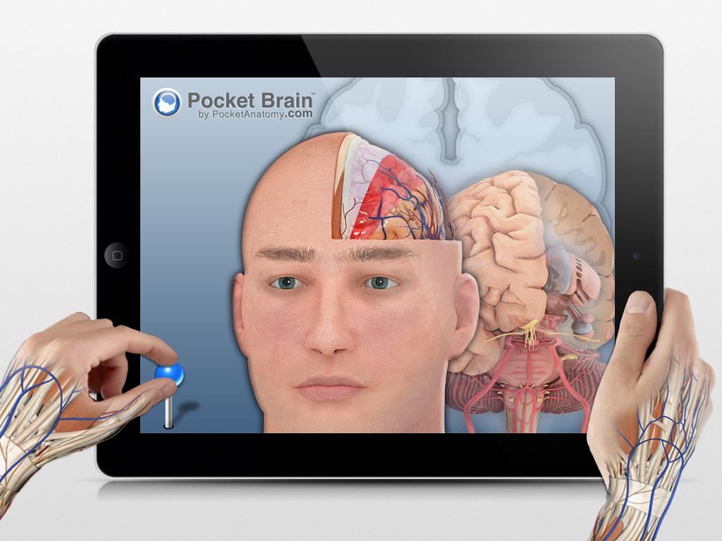 Pocket Brain - Explore the Human Brain like Never Before.