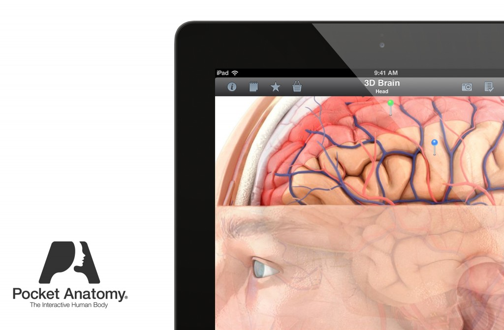 Pocket Brain2