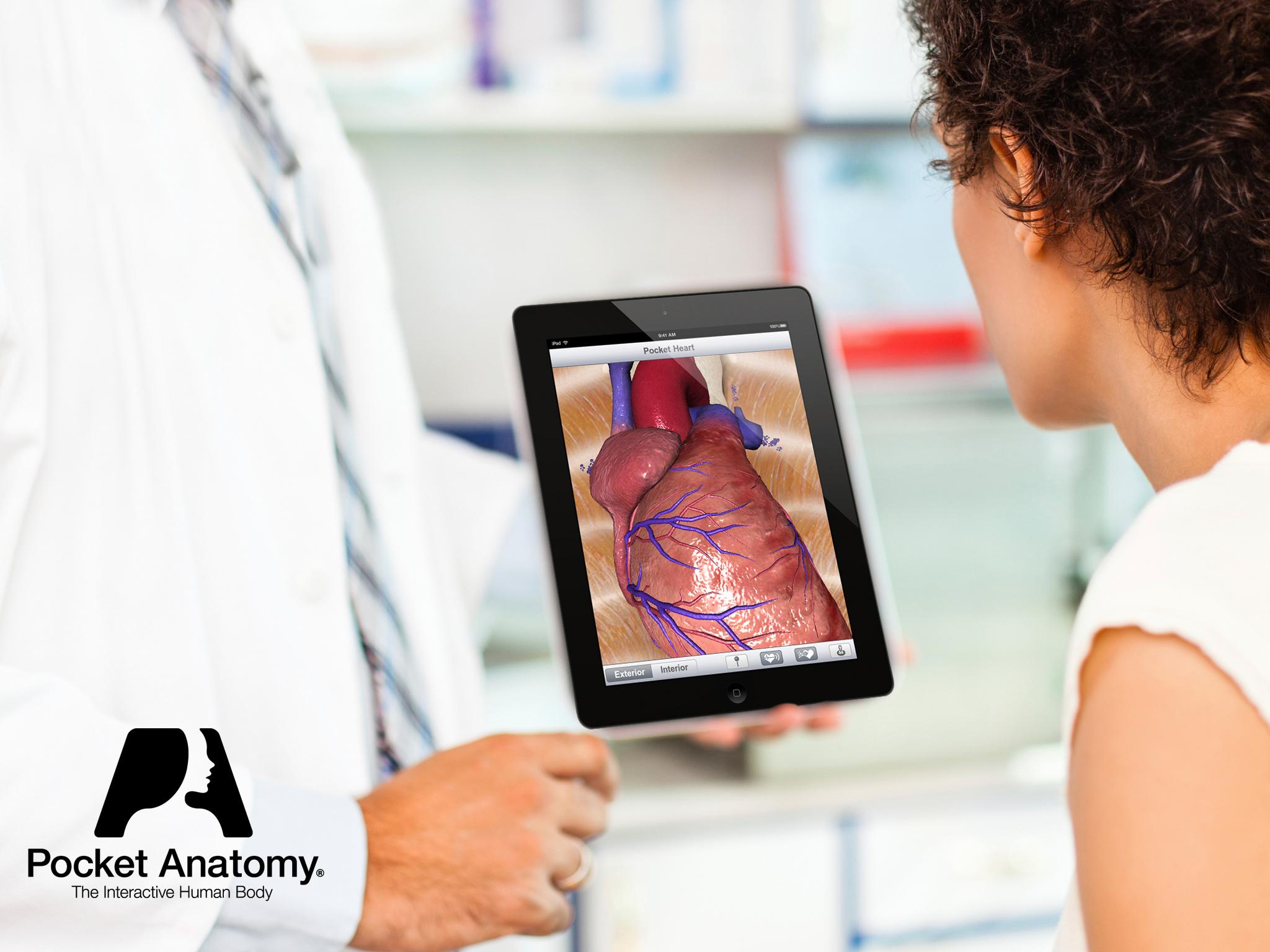 Anatomy Of Cardiovascular Disease Cvd