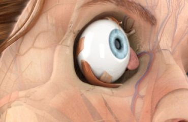 Pocket Anatomy Eye