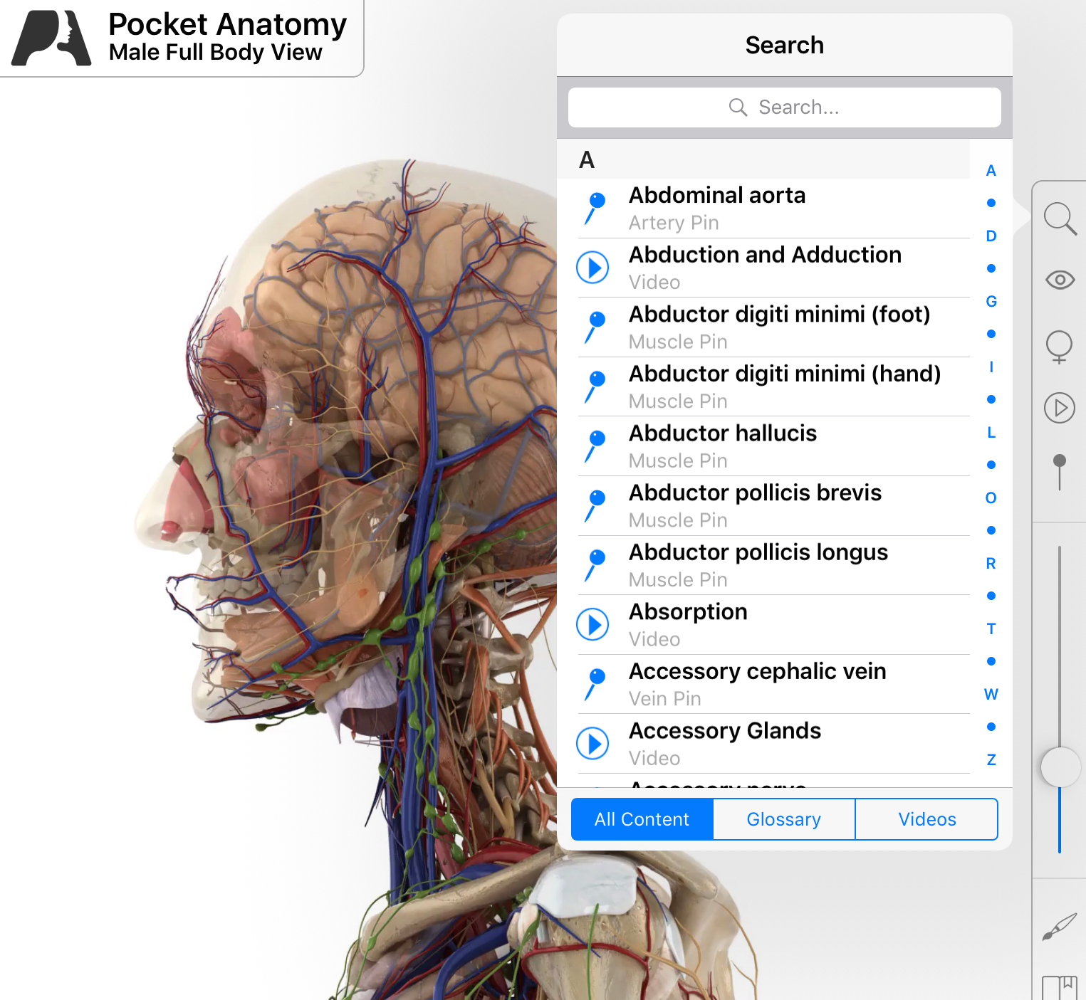 Medical Terminology Pocket Anatomy