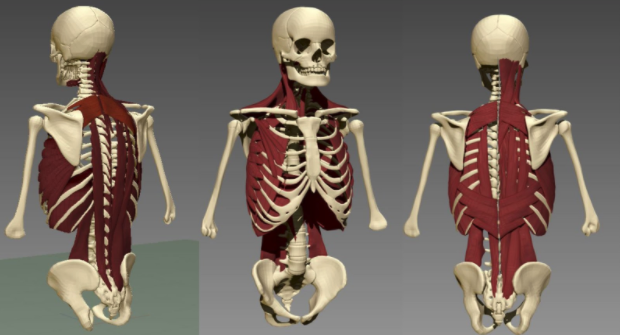 BodyParts 3D Models repositioned to fit the pose of our Skeleton.